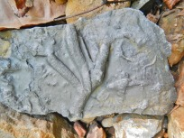 trace fossil