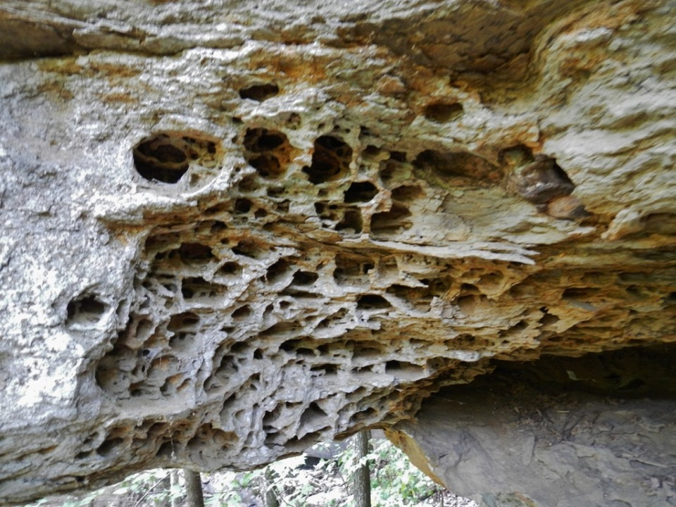 Taphoni (honeycomb weathering) in lower Cane Hill sandstone
