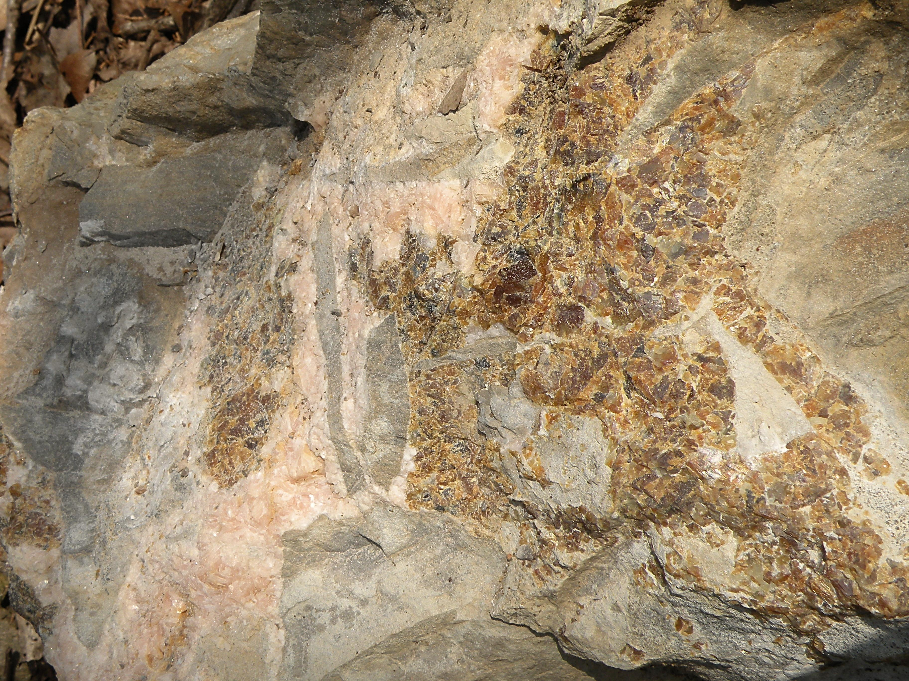 Fossiliferous Dolostone
