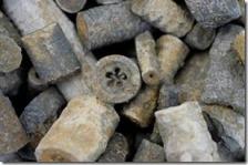 Crinoid stems and Columnals-Batesville